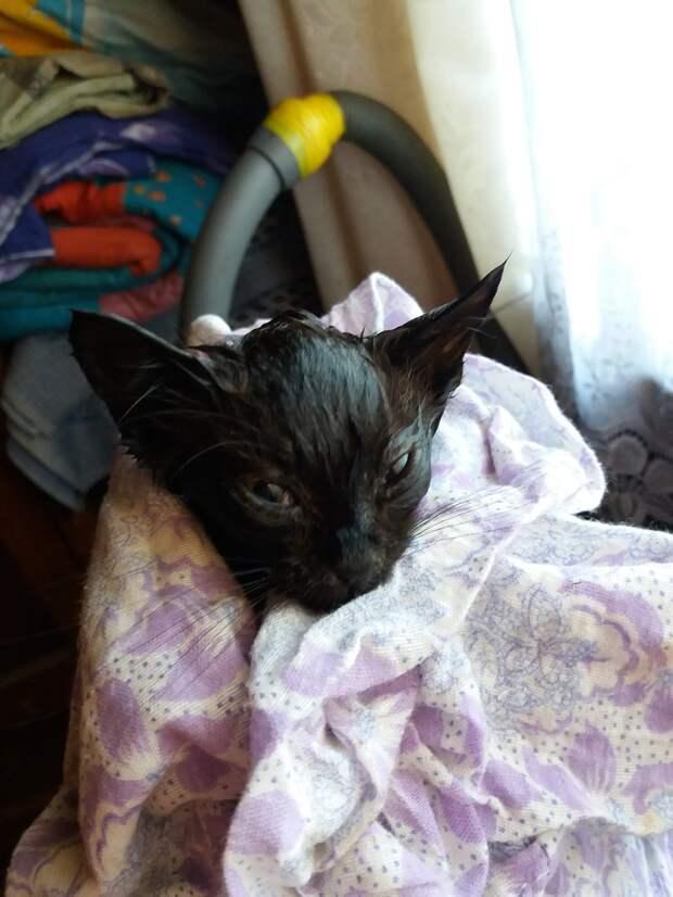 Малышку выкинули в лес в полиэтиленовом мешке, плотно завязав узлом...