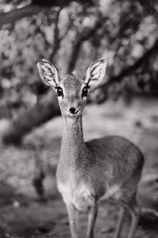 37 фотографий животных, которые вызывают улыбку - 16