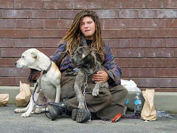 39.  бездомный, любовь, собака