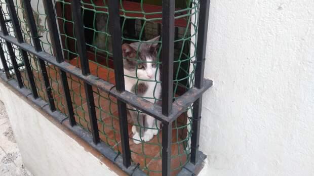 Кошки в Испании