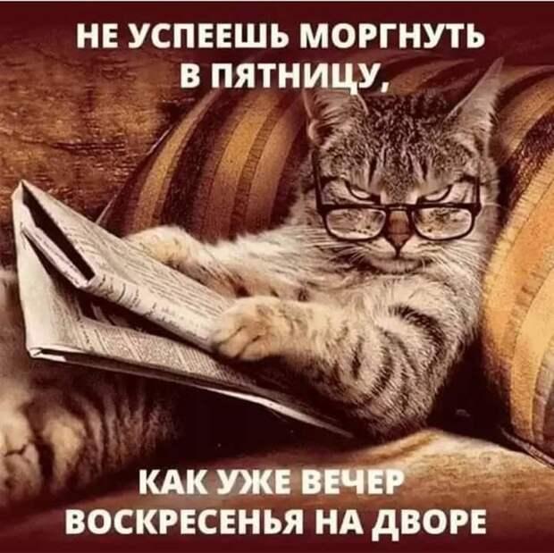 Разговор двух психиатров: - Как вы думаете, коллега, разговаривать с кошкой - это паранойя?...