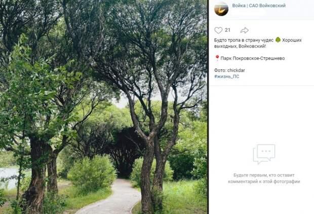 Фото дня: сказочная тропа в парке «Покровское-Стрешнево»
