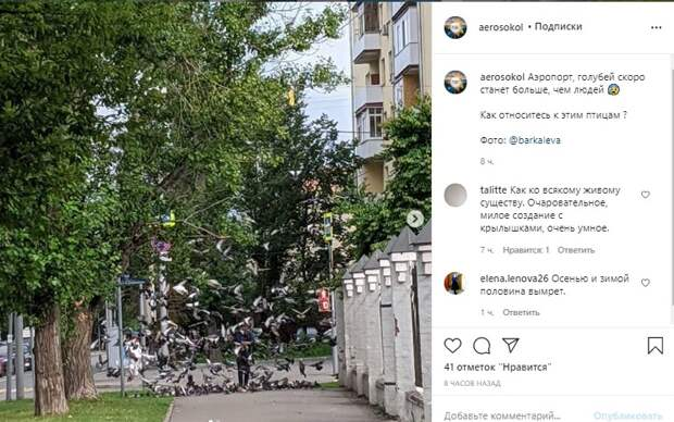 Одобряете ли вы кормление голубей? – новый опрос среди читателей «Петровского парка»