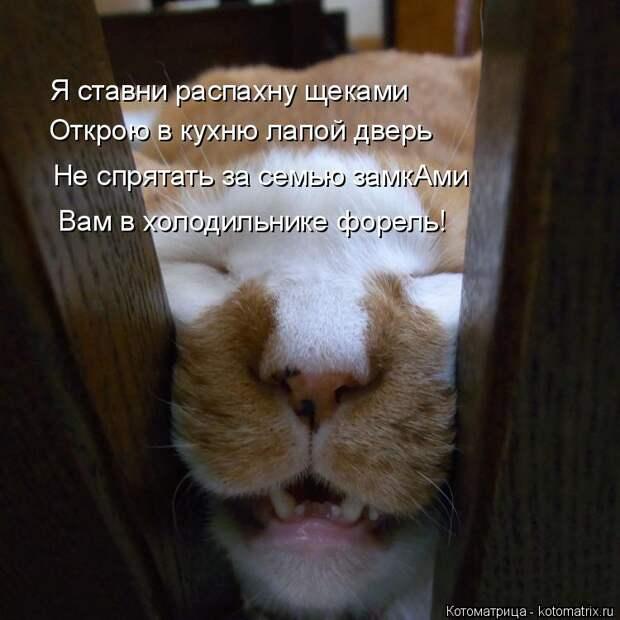 Котоматрица: Я ставни распахну щеками Открою в кухню лапой дверь Не спрятать за семью замкАми Вам в холодильнике форель!
