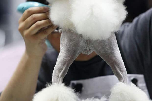 Стильные питомцы: реакции животных на превращение их в настоящих модников