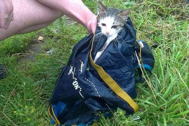 В Петербурге котенка-робинзона спасли с необитаемого островка