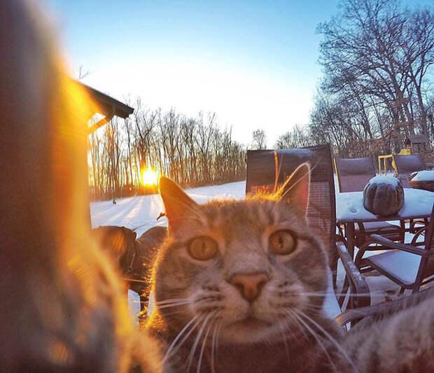 «Селфи-кот» и «братки с района» завоевали Instagram