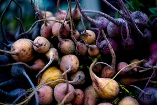 Свекла: слагаемые урожая
