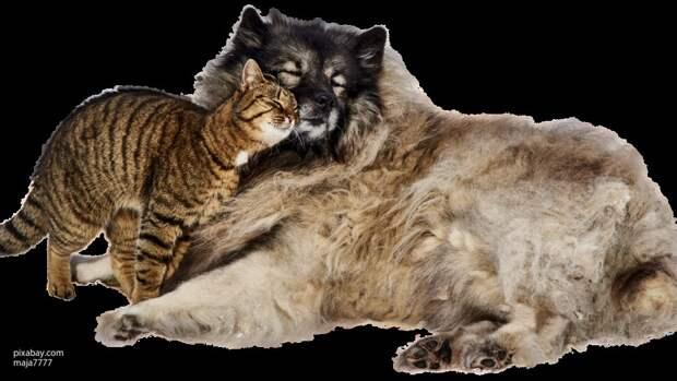 Ученые создали программу для установления родственных связей между животными
