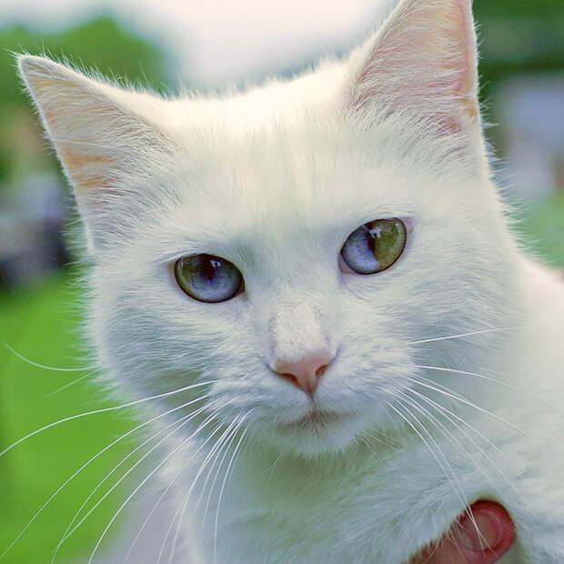 different-eye-color-heterochromia-15__700