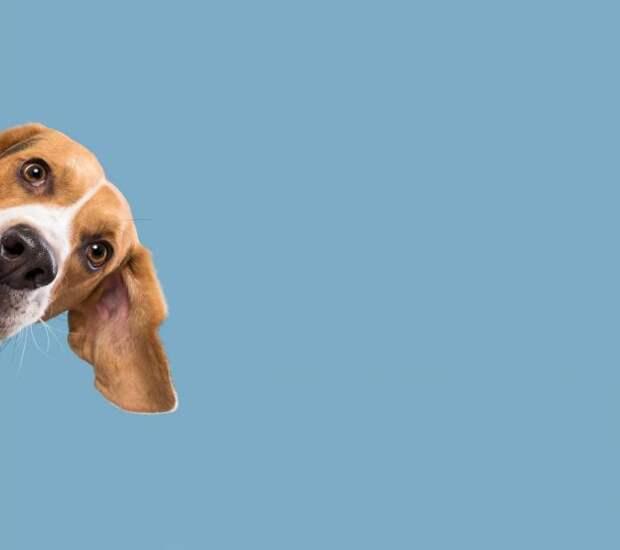 У собак тоже бывают эмоции