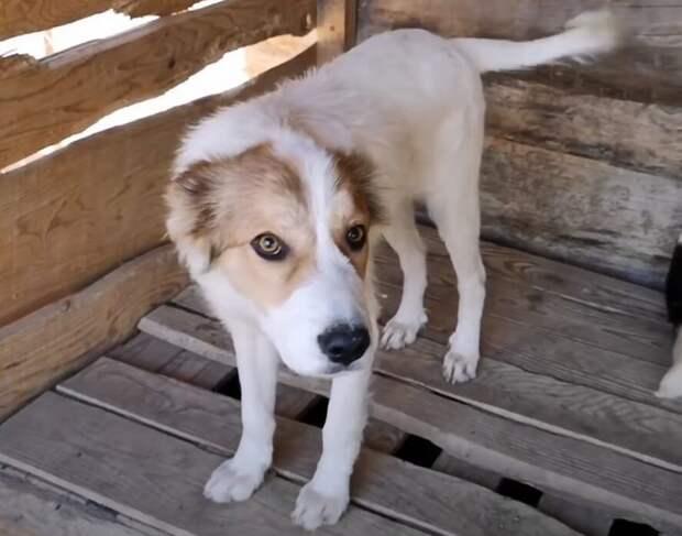 Собака жила в покрышках и даже не надеялась, что ее заберут