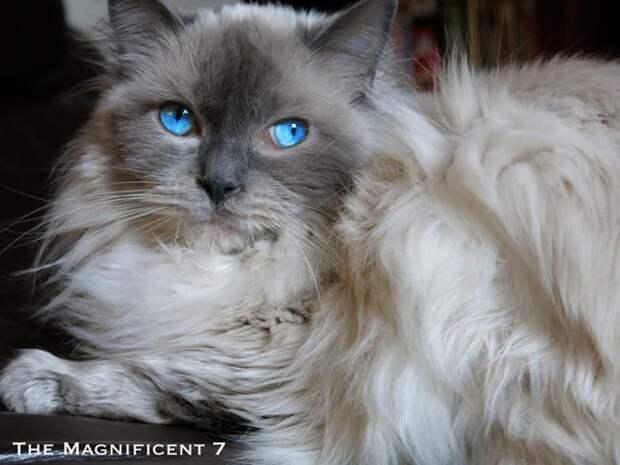 7 кошек, сильная женщина и миллион человек, следящих за ними!)