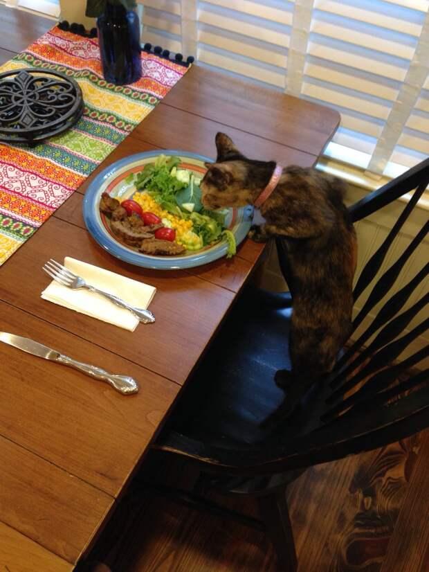кот ворует еду