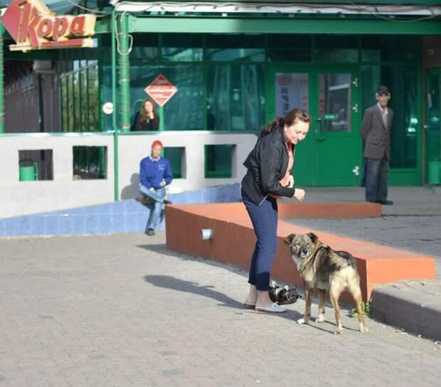 Дружба бездомных кота и собаки покорила кемеровчан
