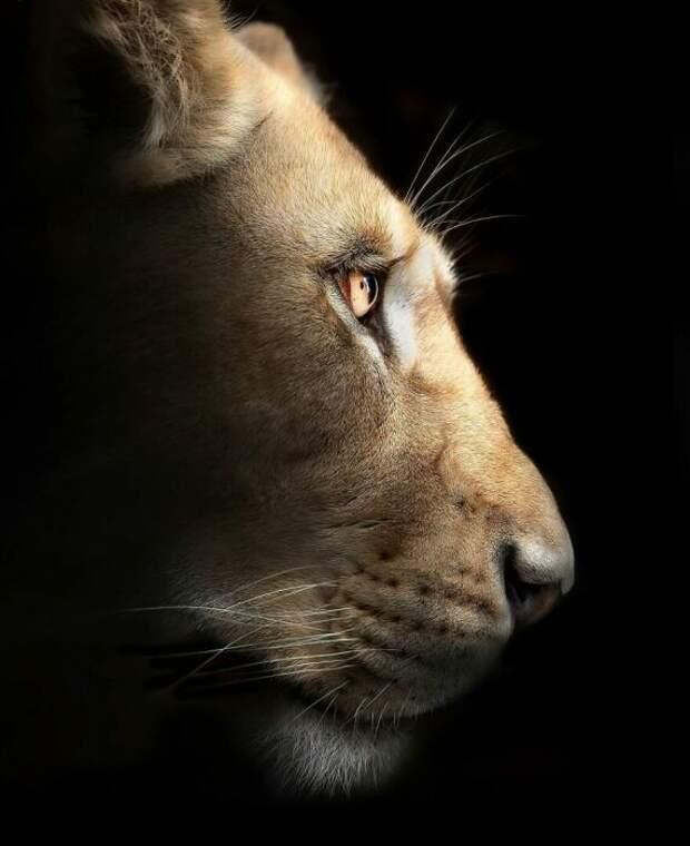 Фотографии призывают человечество сохранить этих царственных животных.