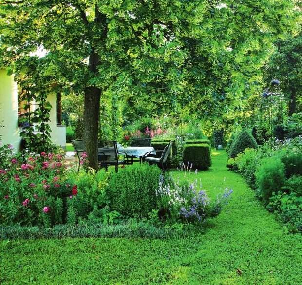 В июле воздух напоен запахом липового цвета.