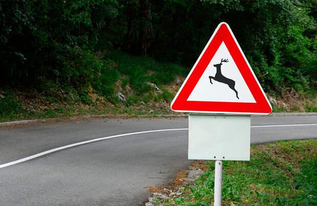 Лоси на дорогах. За сбитое животное могут лишить прав и даже свободы