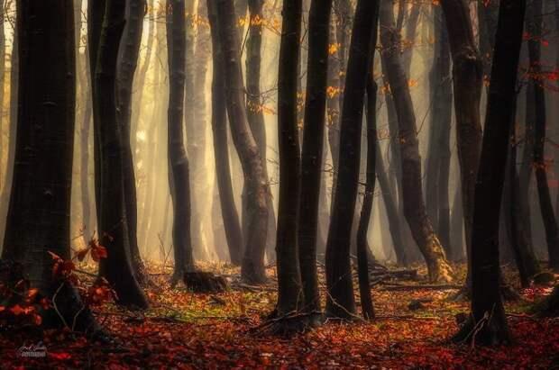 Осенняя окраска леса в фотографиях