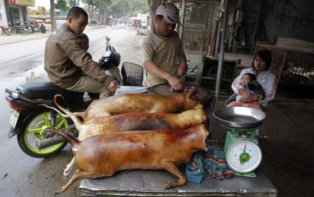 Жуткие, блюда, страны, самые, еда, продукты, мясо собаки, мясо лемура,тухлые яйца, черепахи,эмбрионы, китай