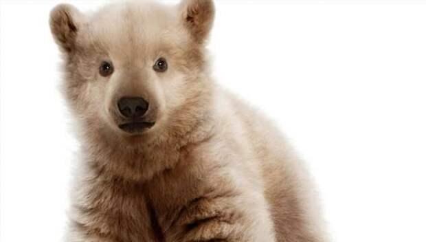 Ученые показали как могут выглядеть животные в будущем после изменения климата