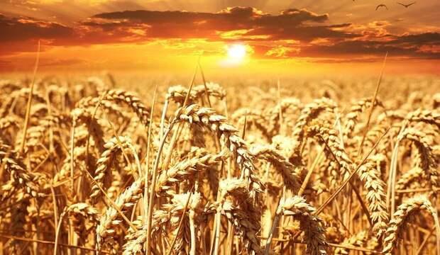 Незалежная аграрная сверхдержава импортирует картошку... из Африки