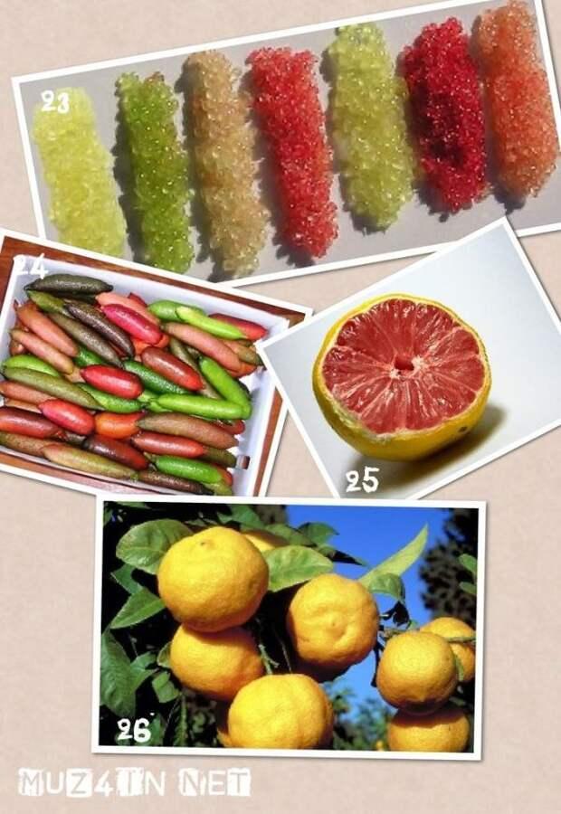 Гибридные фрукты и ягоды, про которые вы, вероятно, не слышали