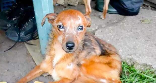 Волонтеры спасли 11 собак, которые жили в печальных условиях и голодали
