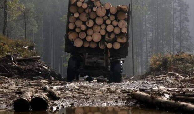 Виновата Россия: в ЕС заметили «варварскую» вырубку лесов в Белоруссии