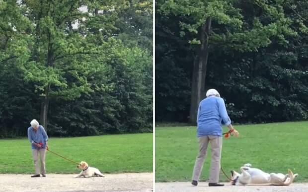 Собака притворилась мертвой, чтобы не идти домой после прогулки