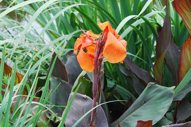 Водная феерия: как придать неповторимый облик садовому пруду