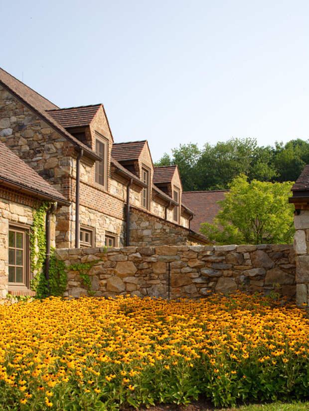 Высокорослыми сортами цветка можно оформить постройки, заборы и ограды