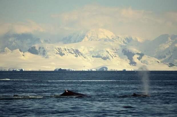 Россия завершит исследования для заявки на расширение границ в Арктике к концу лета