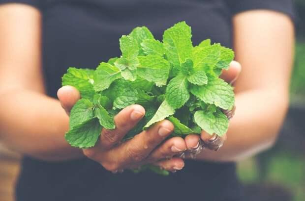 Защитить сад от ос очень просто — достаточно посадить эти растения