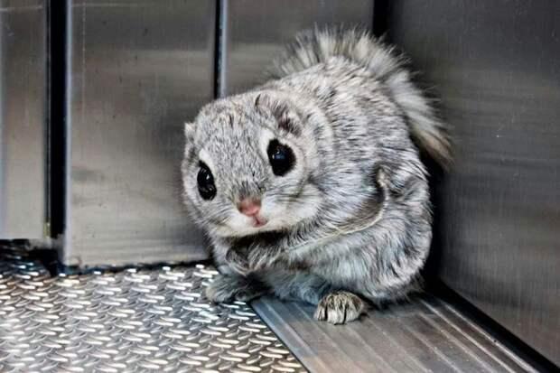 Ученые показали самых крошечных и милых животных Земли. Субъективный Топ-10