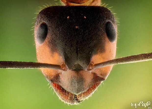 Почему полезны насекомые
