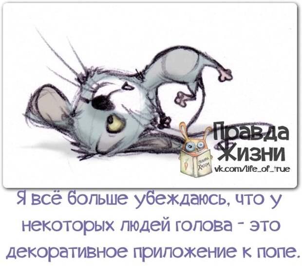 5672049_1382321914_frazochki11 (604x539, 62Kb)