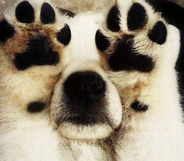 Собачки которые очень хотели спрятаться-12