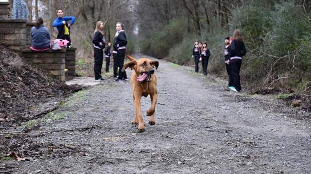 Собака, которую выпустили пописать, случайно финишировала седьмой на полумарафоне марафон, случай, собака