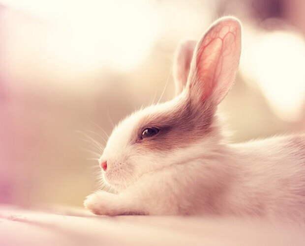 Очаровательные кролики