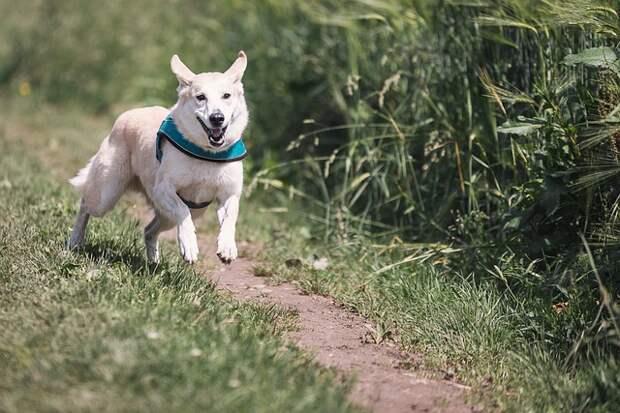 """Пробежаться в марафоне с собаками можно будет в парке """"Кузьминки""""//Фото: pixabay.com"""