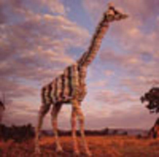 С миру по монетке – и жираф спасен