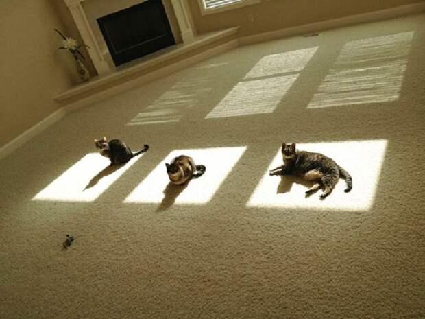 Каждой кошке по окошку.