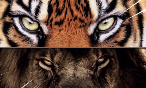 10 животных, которые ненавидят друг друга