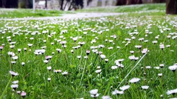 Где становится еще краше с приходом весны