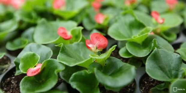 В клумбах на Серебрякова высадили цветы