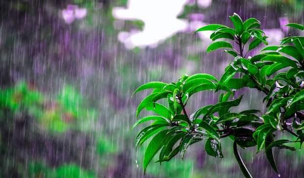 Долгожданные дожди обрушатся наКарелию