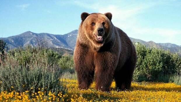 http://www.poznavayka.org/wp-content/uploads/2015/03/medved-grizli-3.jpg