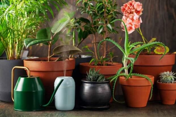 Увлажнение воздуха для цветов