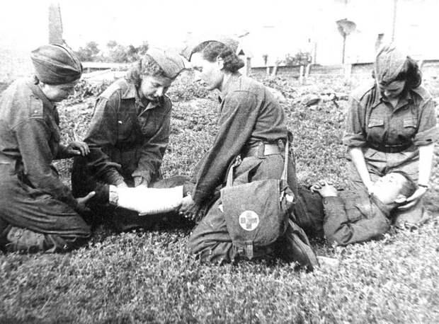 Шесть растений, которыми спасали людей в великой отечественной войне